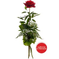 Róża 60-80 cm+ Torcik